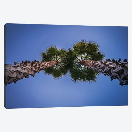 Pine Cones On The Tree Canvas Print #GLM462} by Glauco Meneghelli Art Print