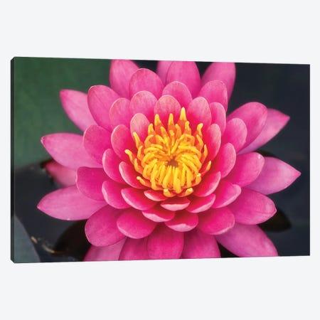 Flower V 3-Piece Canvas #GLM46} by Glauco Meneghelli Canvas Print