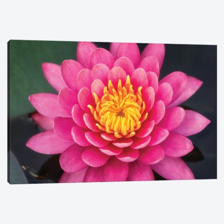 Flower V Canvas Print #GLM46} by Glauco Meneghelli Canvas Print