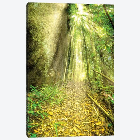Tropical Forest II Canvas Print #GLM491} by Glauco Meneghelli Canvas Wall Art