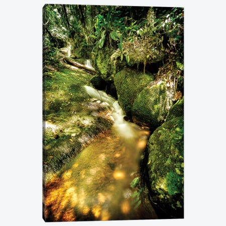 Tropical Forest III Canvas Print #GLM492} by Glauco Meneghelli Canvas Wall Art