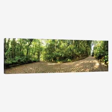 Tropical Forest V Canvas Print #GLM494} by Glauco Meneghelli Art Print
