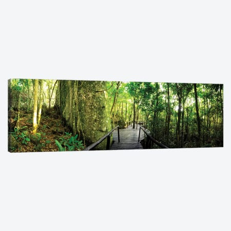 Tropical Forest VI Canvas Print #GLM495} by Glauco Meneghelli Canvas Art Print