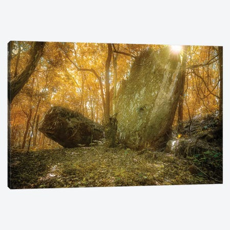 Tropical Forest VII Canvas Print #GLM496} by Glauco Meneghelli Canvas Print