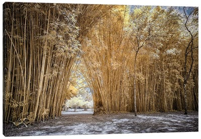 Bamboo Path - Sao Paulo, Brazil Canvas Art Print