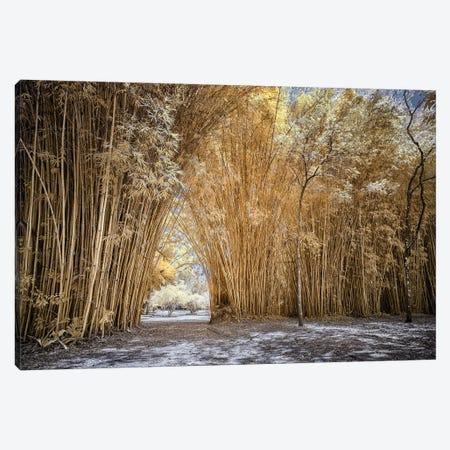 Bamboo Path - Sao Paulo, Brazil Canvas Print #GLM4} by Glauco Meneghelli Canvas Art
