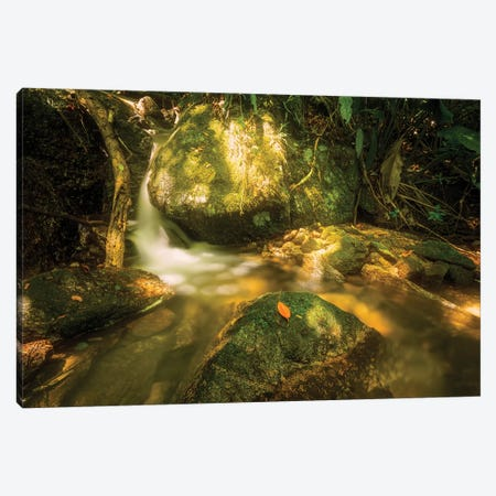 Tropical Forest XVII Canvas Print #GLM506} by Glauco Meneghelli Canvas Art Print
