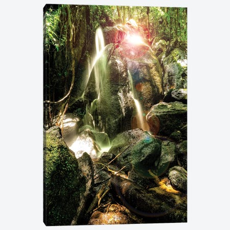 Tropical Forest XVIII Canvas Print #GLM507} by Glauco Meneghelli Canvas Art Print