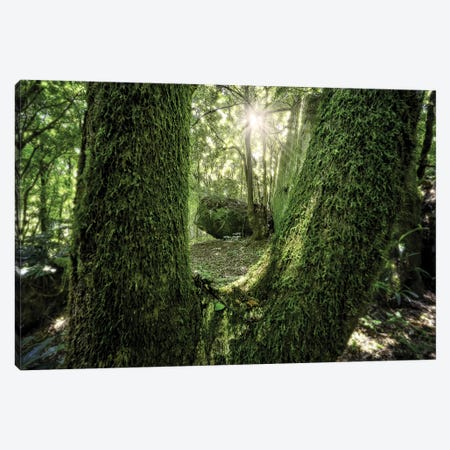 Tropical Forest XXIII Canvas Print #GLM512} by Glauco Meneghelli Canvas Print