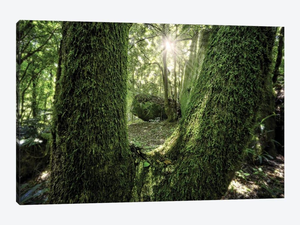Tropical Forest XXIII by Glauco Meneghelli 1-piece Canvas Wall Art