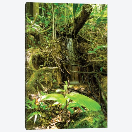 Tropical Forest XXV Canvas Print #GLM514} by Glauco Meneghelli Canvas Art