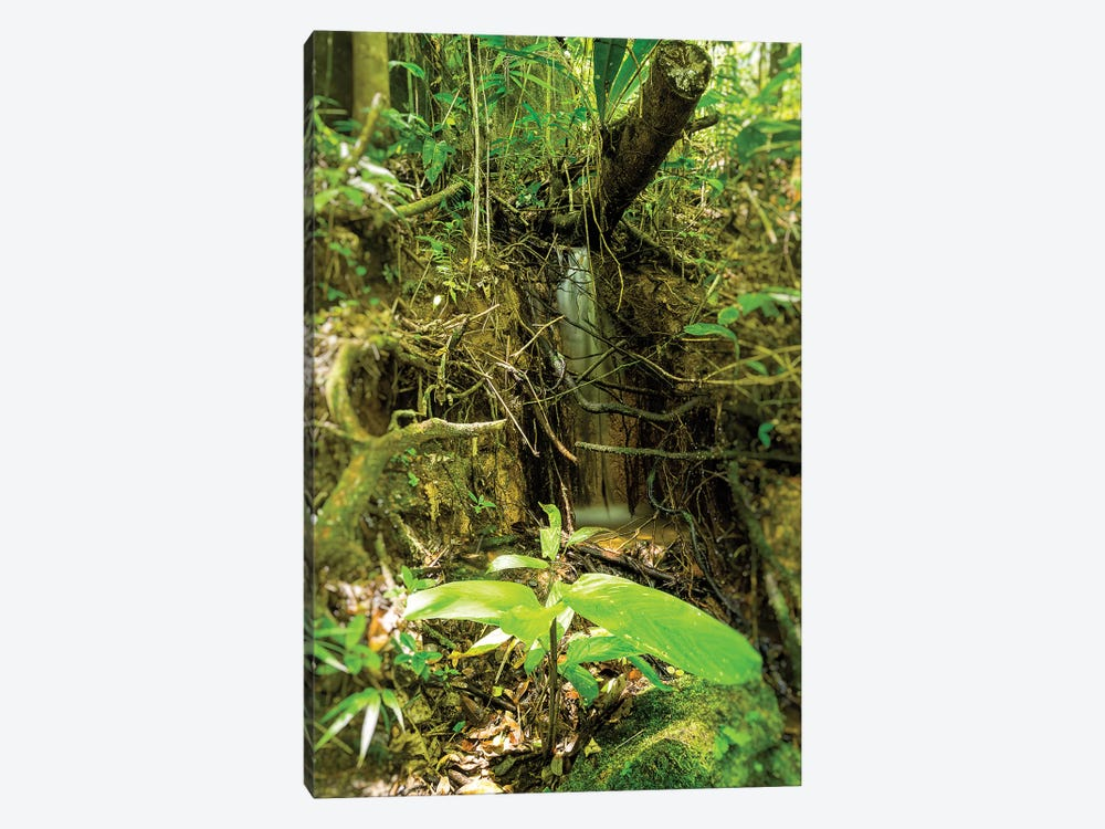 Tropical Forest XXV by Glauco Meneghelli 1-piece Canvas Wall Art