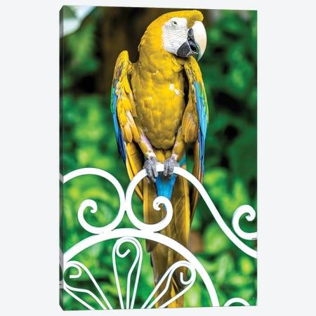 Macaw III Canvas Print #GLM518} by Glauco Meneghelli Canvas Art Print