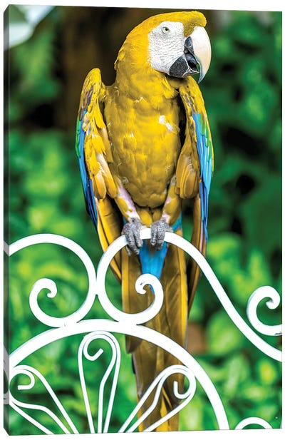 Macaw III Canvas Art Print