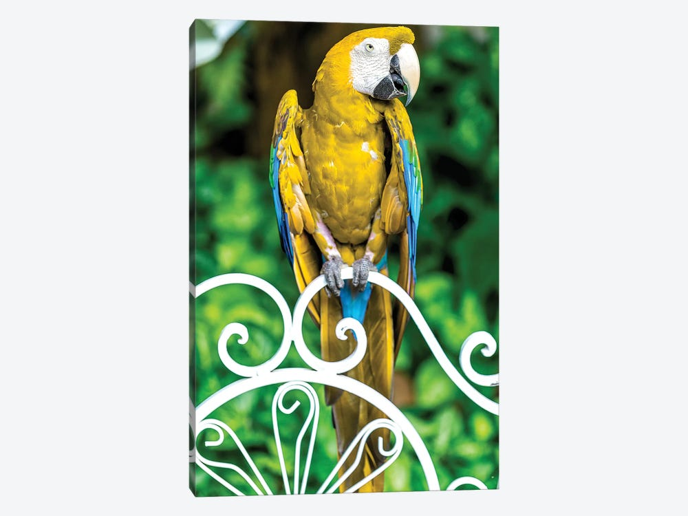 Macaw III by Glauco Meneghelli 1-piece Canvas Wall Art