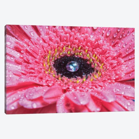 Flower X Canvas Print #GLM51} by Glauco Meneghelli Canvas Print