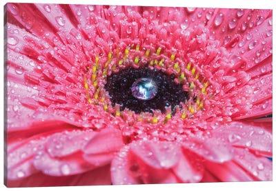 Flower X Canvas Art Print
