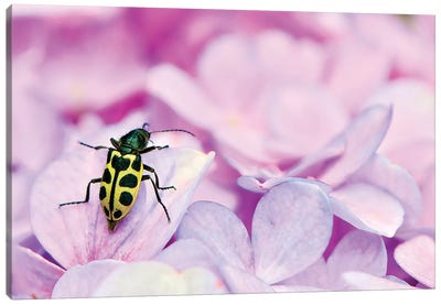 Bug Canvas Art Print