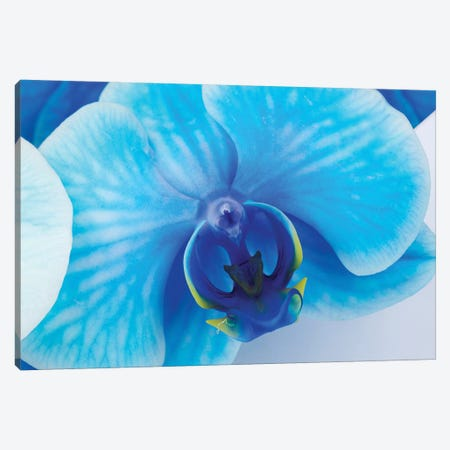 Blue Orchid I Canvas Print #GLM532} by Glauco Meneghelli Canvas Art Print