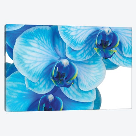 Blue Orchid II 3-Piece Canvas #GLM533} by Glauco Meneghelli Canvas Print