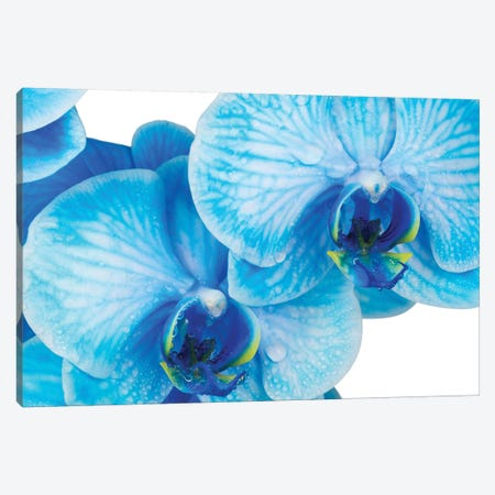 Blue Orchid IV 3-Piece Canvas #GLM535} by Glauco Meneghelli Canvas Artwork