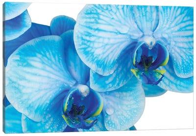 Blue Orchid IV Canvas Art Print