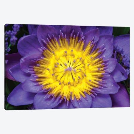 Flower XII Canvas Print #GLM53} by Glauco Meneghelli Canvas Print