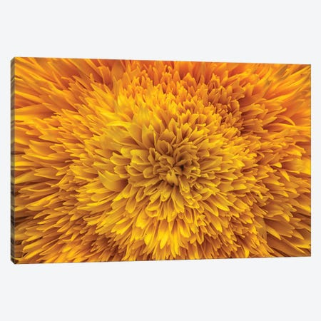 Flower XIII Canvas Print #GLM54} by Glauco Meneghelli Canvas Wall Art