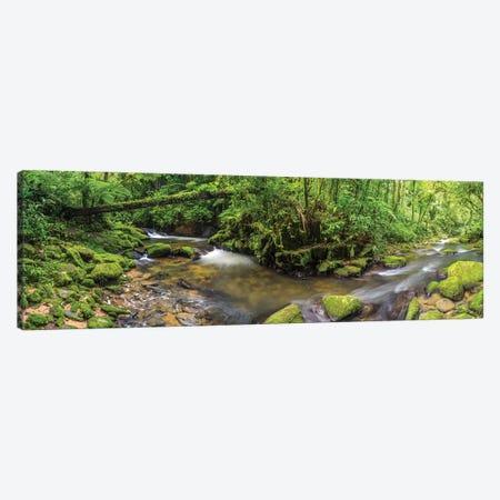 Jungle Panorama I Canvas Print #GLM553} by Glauco Meneghelli Art Print