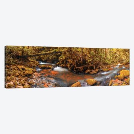 Jungle Panorama II Canvas Print #GLM554} by Glauco Meneghelli Canvas Art