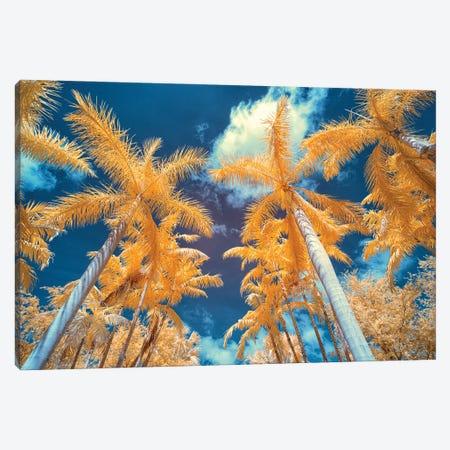 Palm Tree I Canvas Print #GLM564} by Glauco Meneghelli Canvas Art Print