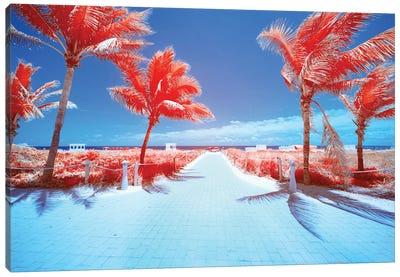 Palm Tree III Canvas Art Print