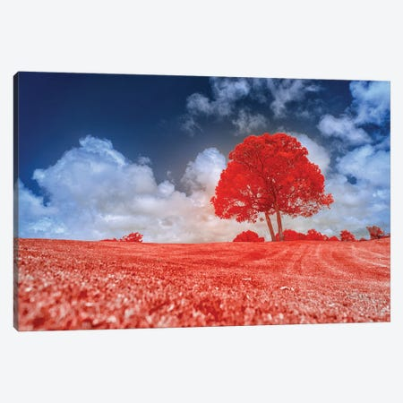 Red Tree Canvas Print #GLM576} by Glauco Meneghelli Canvas Art