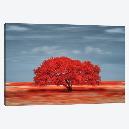 lonely red tree on the field Canvas Print #GLM577} by Glauco Meneghelli Canvas Artwork