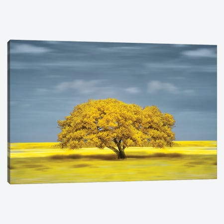 lonely yellow on the field Canvas Print #GLM578} by Glauco Meneghelli Canvas Print