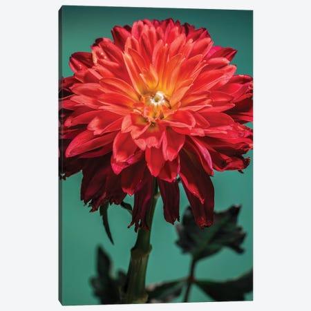 Flower XVI Canvas Print #GLM57} by Glauco Meneghelli Canvas Art