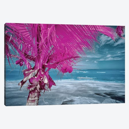 The Lizard on tropical palm tree #2 Canvas Print #GLM580} by Glauco Meneghelli Canvas Art