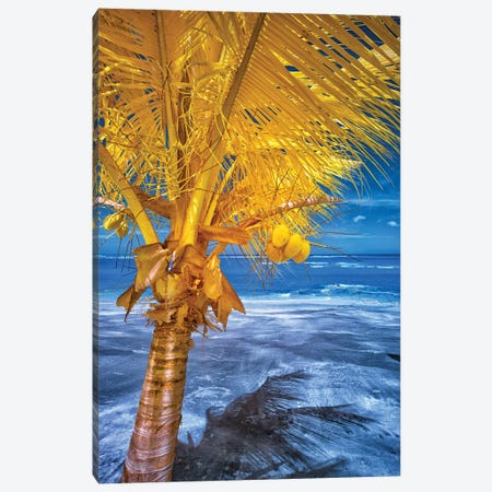 The Lizard on tropical palm tree #1 Canvas Print #GLM581} by Glauco Meneghelli Canvas Artwork
