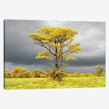 Lonely tree on the field #2 Canvas Print #GLM582} by Glauco Meneghelli Canvas Art