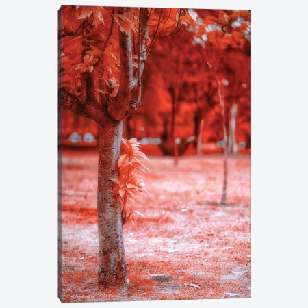 Red Field Canvas Print #GLM583} by Glauco Meneghelli Canvas Artwork