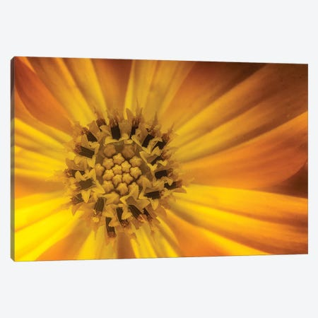 Flower XIX Canvas Print #GLM60} by Glauco Meneghelli Canvas Art