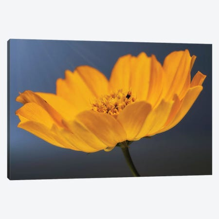 Flower XX Canvas Print #GLM61} by Glauco Meneghelli Canvas Artwork