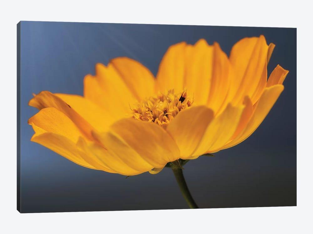 Flower XX by Glauco Meneghelli 1-piece Canvas Art