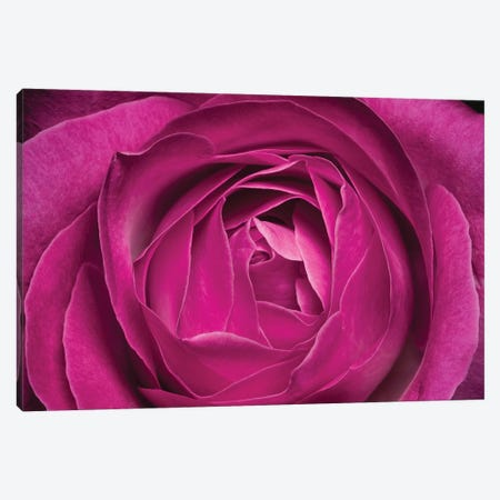 Flower XXV Canvas Print #GLM66} by Glauco Meneghelli Art Print