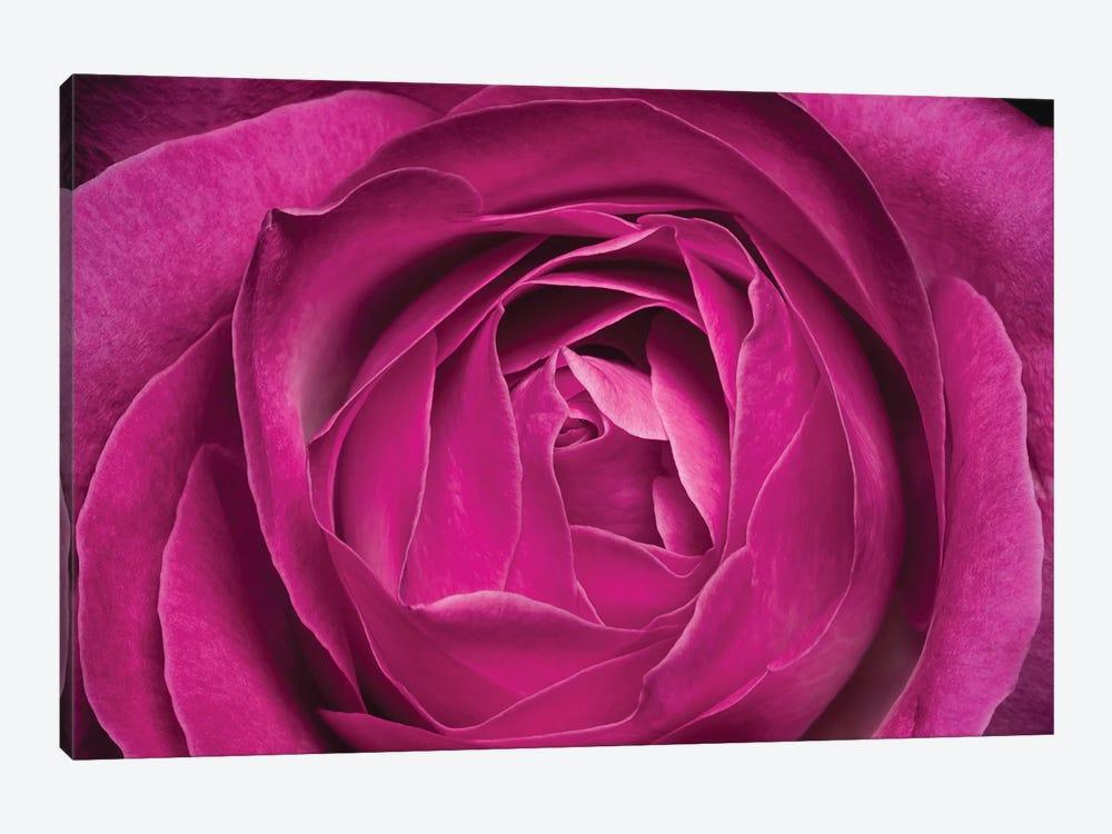 Flower XXV by Glauco Meneghelli 1-piece Canvas Print