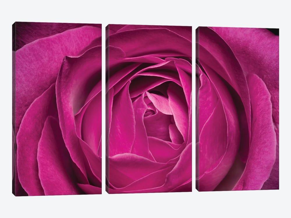 Flower XXV by Glauco Meneghelli 3-piece Art Print