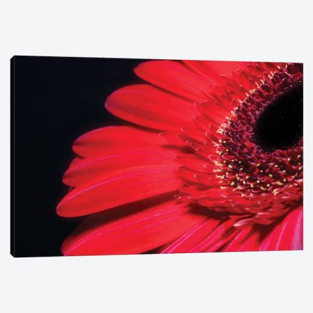 Flower XXVII Canvas Print #GLM68} by Glauco Meneghelli Canvas Wall Art