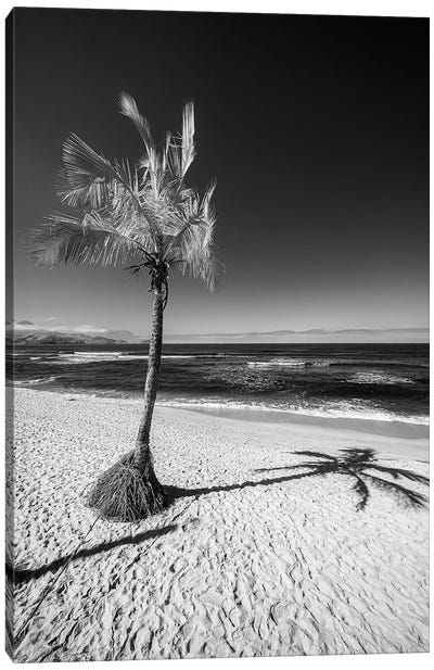 Palm Canvas Art Print