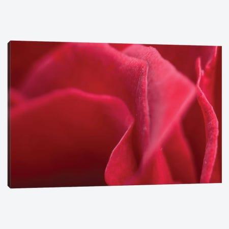 Flower XLII Canvas Print #GLM83} by Glauco Meneghelli Canvas Artwork