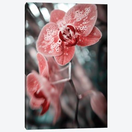 Flower XLV 3-Piece Canvas #GLM86} by Glauco Meneghelli Art Print
